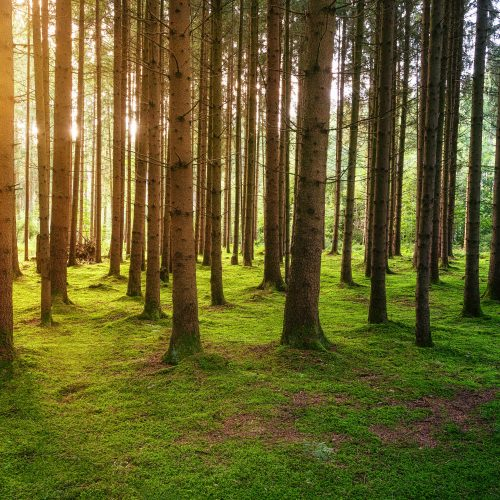 3 Lessons from Trees – A Hands-On Nature Bible Study