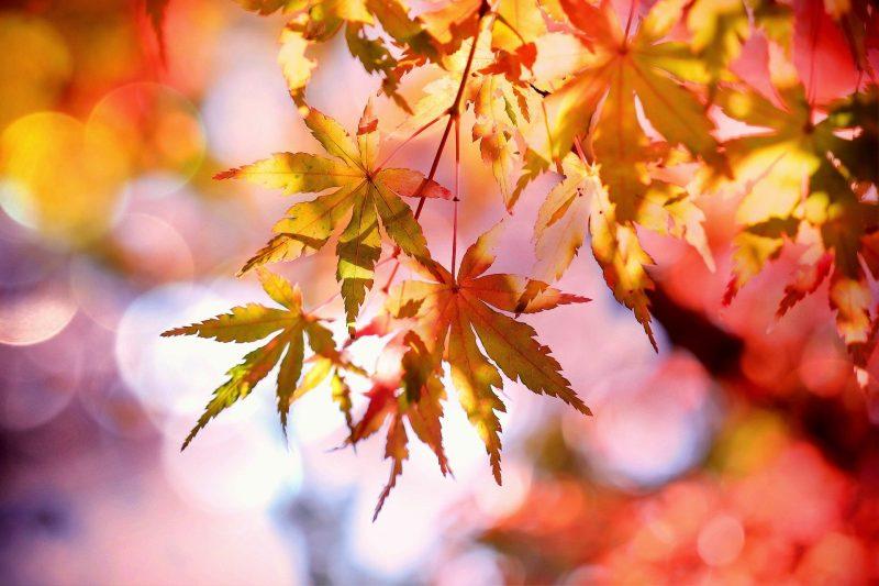 Fall Leaves Bible Study