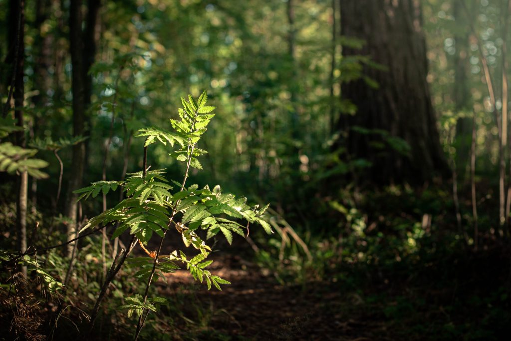 bible lessons from trees phototropism seedling in forest facing the light